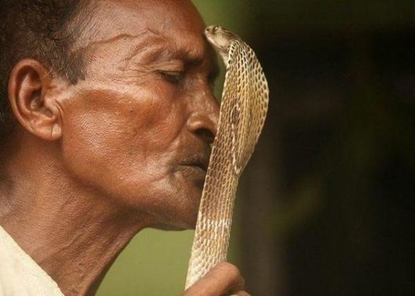 Snakes on a porn set