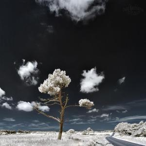 tree Dancer920.jpg.CROP.article920-large